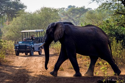 Game drives in The Kruger
