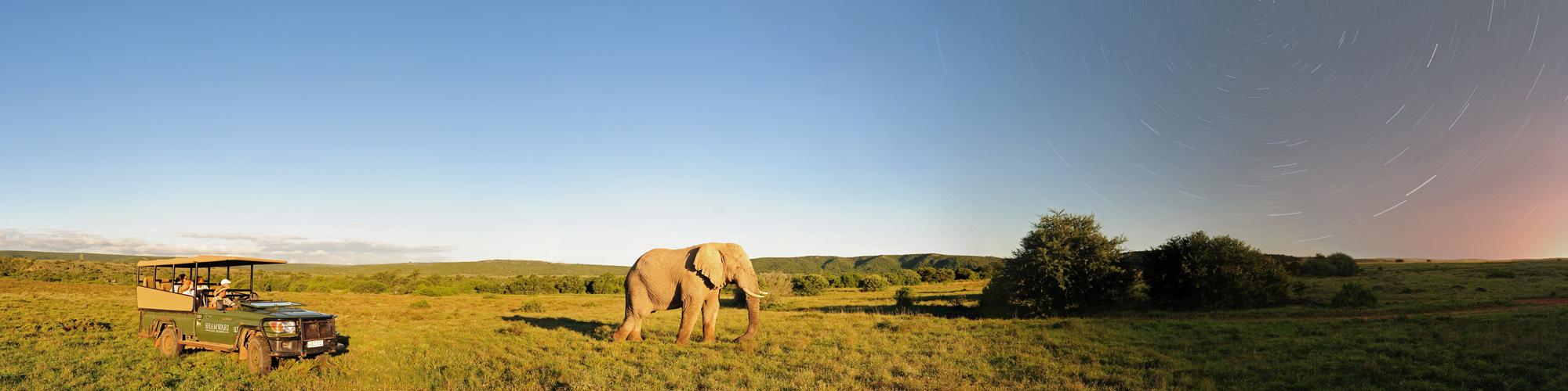 elephant game drive background resize