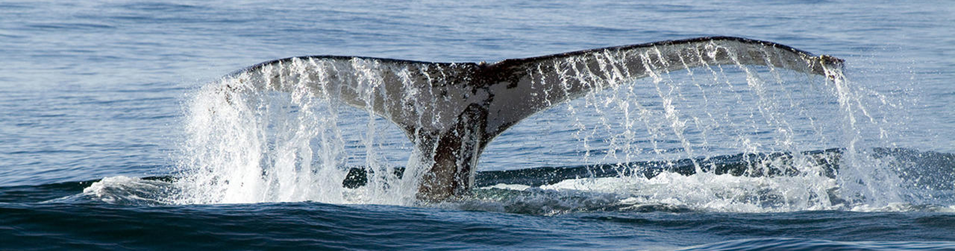 inspirational places mosaic whale rezied website