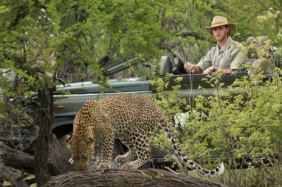 Thrilling game drives at Kambaku!