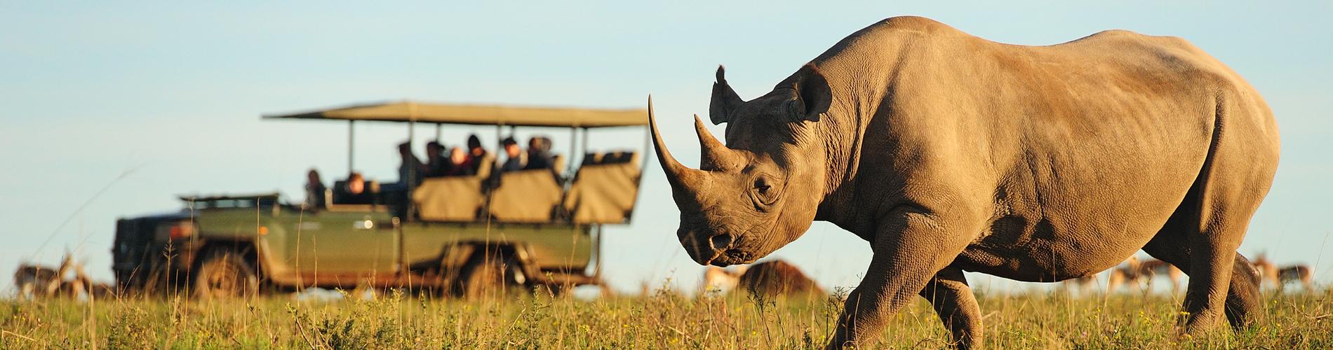 shamwari rhino reszied website
