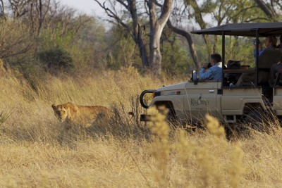 Thrilling game drives in the Moremi!