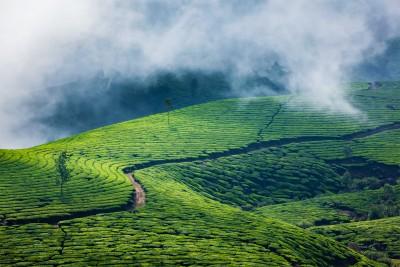 The stunning tea plantation of Munnar