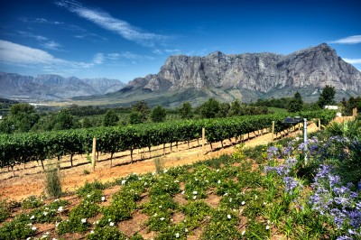 The stunning Cape Winelands