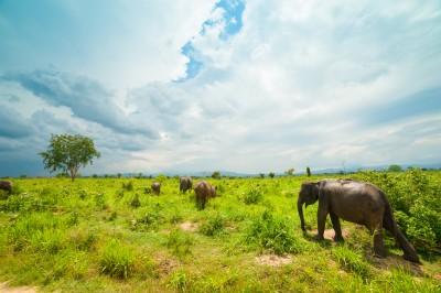 Elephants of Uda Walawe