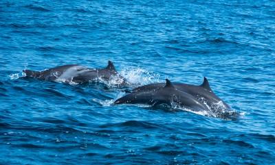 Dolphin excursions, Kalpitiya