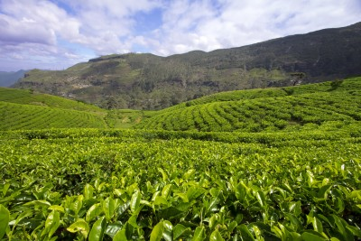 Stunning tea country