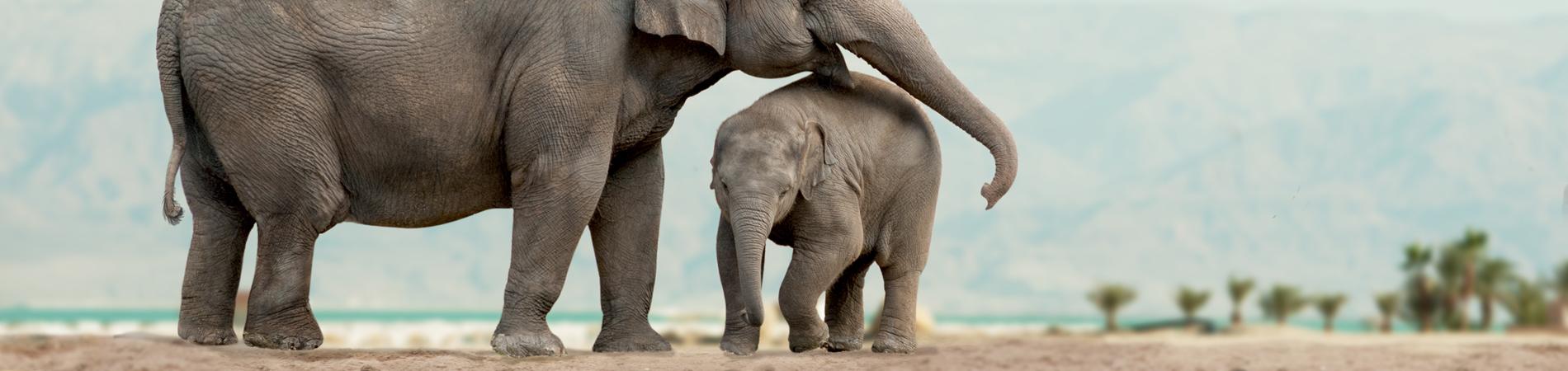 shutterstock tz header baby elephant