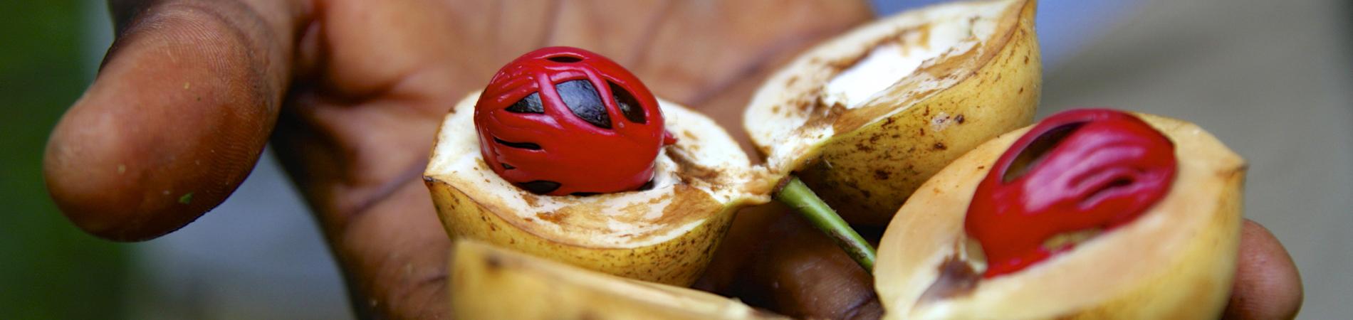 shutterstock znz header nutmeg spice