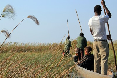 Mokoro (dugout canoe) safari