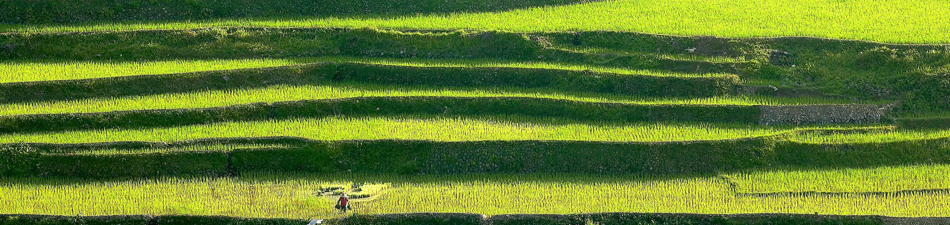 Philippines tourism PHI banaue rice terraces green header