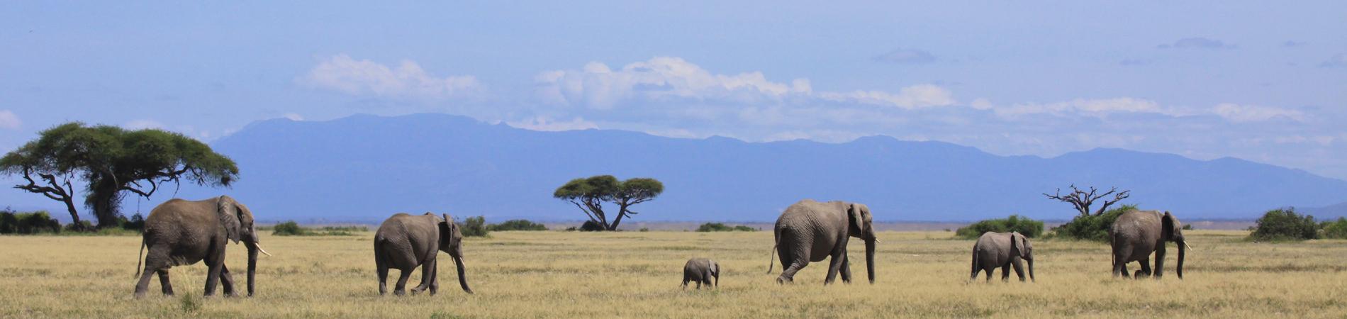 shutterstock ken elephant family header