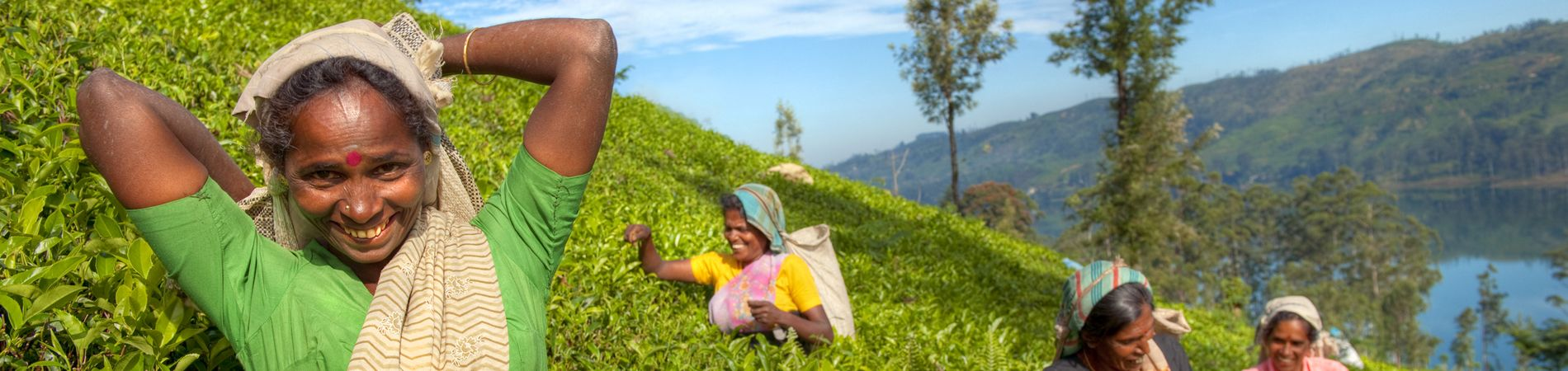 shutterstock sri ladies tea header