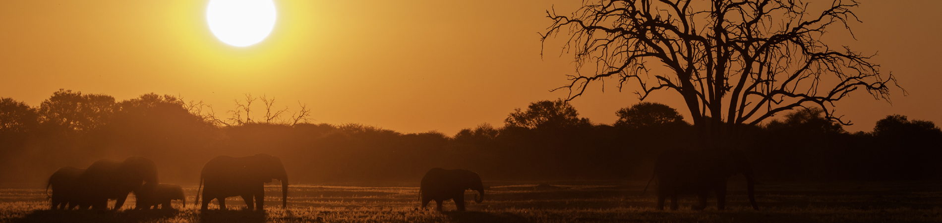 shutterstock zim elephants sunset header