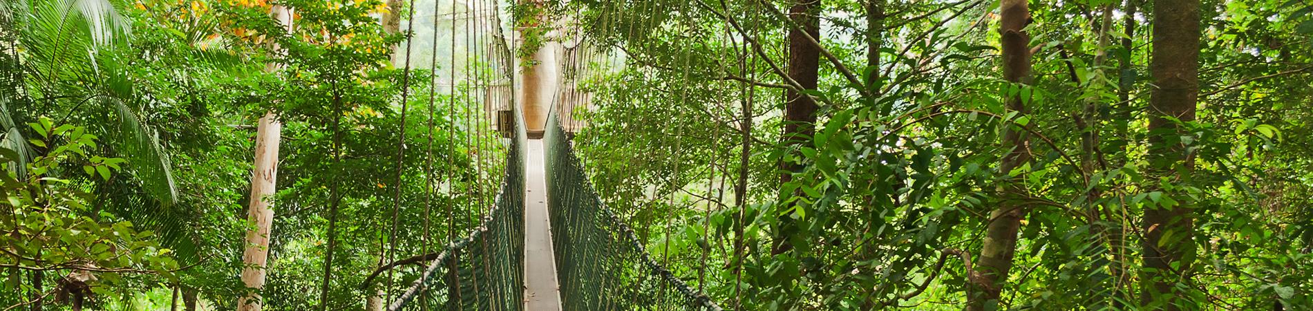 shutterstock_msa swinging walkway Taman Negara header
