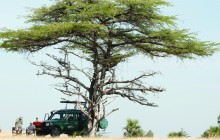 Game drive, Authentic Tanzania