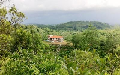 The stunning plantation setting at Niyagama House
