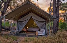 The chic 1950s style safari tents at Machaba Camp